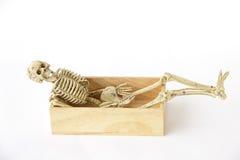 Foto conservada em estoque: Esqueleto humano na caixa de madeira, ainda vida no CCB branco Fotografia de Stock
