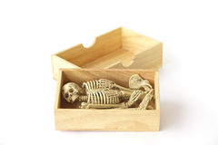 Foto conservada em estoque: Esqueleto humano na caixa de madeira, ainda vida no CCB branco Imagens de Stock
