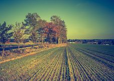 Foto d'annata dei campi in Polonia Fotografia Stock Libera da Diritti