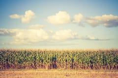 Foto d'annata del campo di grano Fotografie Stock Libere da Diritti
