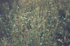 Foto d'annata del fiore dell'erba Fotografia Stock