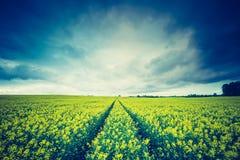 Foto d'annata del giacimento di fioritura del seme di ravizzone ad alba Fotografia Stock Libera da Diritti