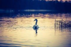 Foto d'annata del lago di tramonto Immagini Stock Libere da Diritti