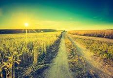 Foto d'annata del tramonto sopra il campo di grano ad estate Fotografie Stock
