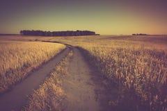 Foto d'annata del tramonto sopra il campo di grano ad estate Immagine Stock