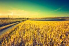Foto d'annata del tramonto sopra il campo di grano ad estate Fotografia Stock Libera da Diritti