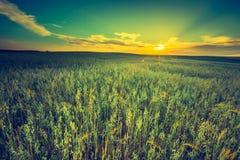 Foto d'annata del tramonto sopra il campo di grano ad estate Fotografia Stock