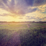Foto d'annata di agricoltura del campo Fotografia Stock Libera da Diritti
