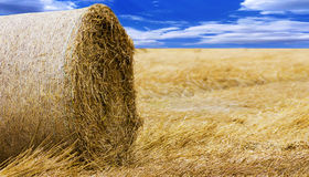 Foto d'annata di fieno-rotolo sul campo dopo il raccolto Fotografia Stock