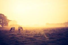 Foto d'annata di paesaggio con le mucche sul pascolo Fotografie Stock Libere da Diritti