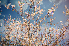 Foto da árvore de florescência bonita com flowe cor-de-rosa pequeno maravilhoso Imagem de Stock Royalty Free