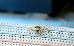 Foto da aranha bonito Fotografia de Stock Royalty Free