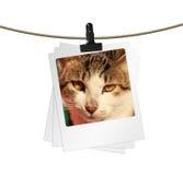 Foto da cara do gato imagens de stock