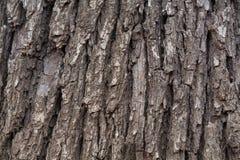 Foto da casca de árvore Fotos de Stock Royalty Free