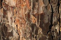 Foto da casca de árvore Fotografia de Stock Royalty Free