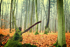 Foto da floresta do outono Foto de Stock Royalty Free