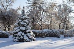 Foto da natureza do inverno das nevadas fortes fotos de stock