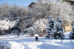 Foto da natureza do inverno das nevadas fortes foto de stock royalty free