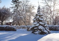Foto da natureza do inverno das nevadas fortes fotografia de stock royalty free