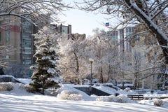 Foto da natureza do inverno das nevadas fortes imagens de stock