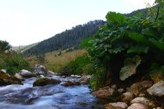 Foto da natureza - rio da montanha da água de mola e a angra rochosa bonita em Cáucaso norte fotos de stock royalty free