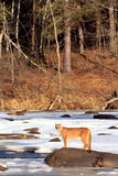 Foto da paisagem do leão de montanha Foto de Stock