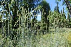 Foto da planta da natureza Foto de Stock