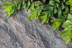 Foto da planta verde - jardinando Fotos de Stock