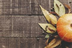 Foto da queda, abóbora bonita com folhas e bagas em rústico Imagem de Stock Royalty Free