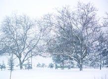 Foto da queda de neve no parque Árvores na neve foto de stock