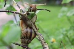 Foto dagli insetti, dalla natura e dalla fauna selvatica Immagine Stock Libera da Diritti