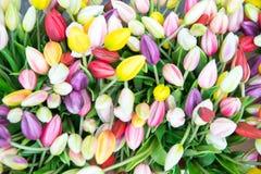 Foto dai tulipani di plastica falsi sul mercato a Amsterdam immagine stock