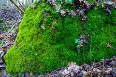 Foto, das ein hellgrünes Moos auf einem alten Stein darstellt stockbilder