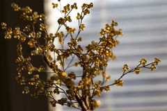 Foto, das einen künstlichen Orangenbaum zeigt Stockfoto