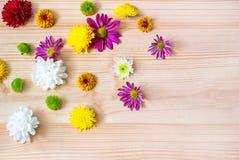 Foto das flores em botão em um fundo de madeira imagens de stock royalty free