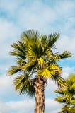Foto das palmeiras contra o céu fotos de stock royalty free