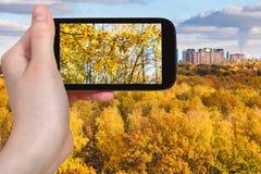Foto de árboles amarillos en bosque del otoño Imagenes de archivo