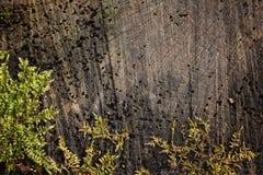 Foto in de bos Groene spruiten van mos op een donkere boom wordt genomen die Royalty-vrije Stock Foto