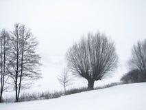 Foto de contraste de árvores geadas no montanhês ao nevar fotografia de stock