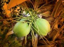 Foto de dois cocos macro Fotos de Stock Royalty Free