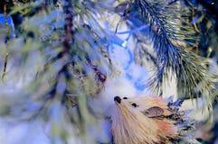 Foto de hadas christmassy del invierno con el erizo del pino, de la nieve y del juguete Fotos de archivo