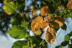 Foto de HDR das folhas coloridas no outono Imagem de Stock Royalty Free