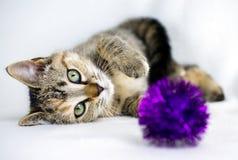 Foto de la adopción del gatito de Tabby Calico, Walton County Animal Control Imagen de archivo libre de regalías
