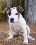 Foto de la adopción del perrito Fotografía de archivo