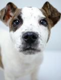Foto de la adopción del perrito Fotografía de archivo libre de regalías