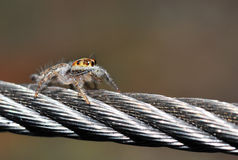 Foto de la araña Imagenes de archivo