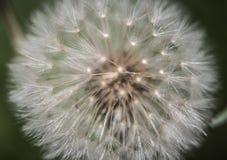 Foto de la bola del soplo en primavera Foto de archivo libre de regalías