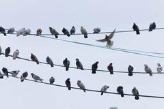 Foto de la calle de un cielo nublado con las palomas y los alambres imagenes de archivo