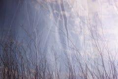 Foto de la exposición doble de las ramas de árbol en caída contra el cielo y la capa texturizada de la tela Fotografía de archivo libre de regalías