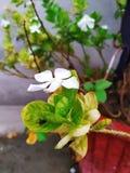 Foto de la flor imagen de archivo libre de regalías